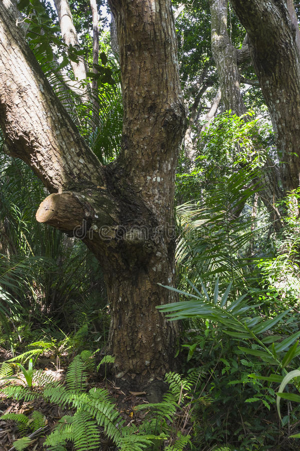 Selva em Zanzibar imagens de stock