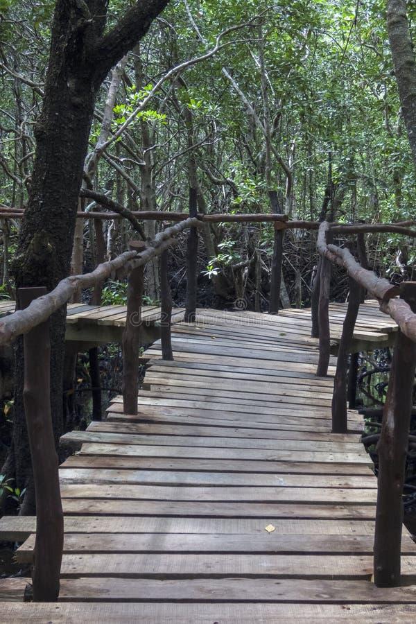 Selva em Zanzibar fotos de stock royalty free