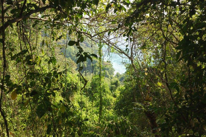 Selva interna fotografia de stock