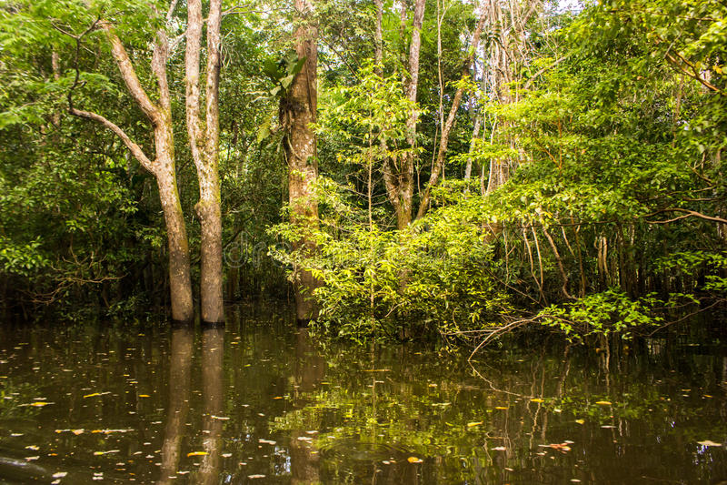 Selva inundada en el río Amazonas fotografía de archivo