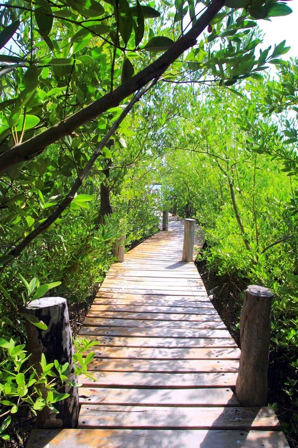 Selva México de la calzada del bosque del mangle fotografía de archivo libre de regalías