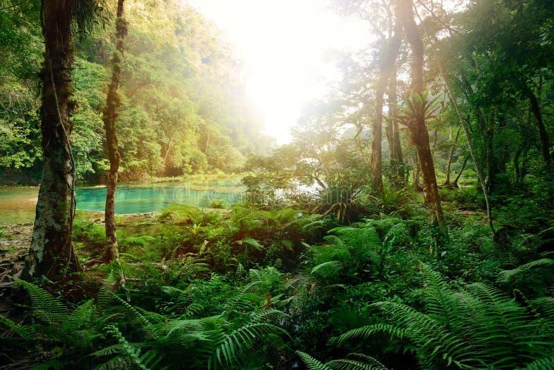 Selva maya misteriosa en el parque nacional Semuc Champey foto de archivo libre de regalías