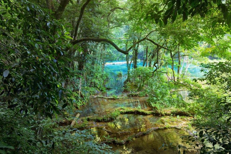 Selva maya salvaje en el parque nacional Semuc Champey Guatemala fotos de archivo libres de regalías