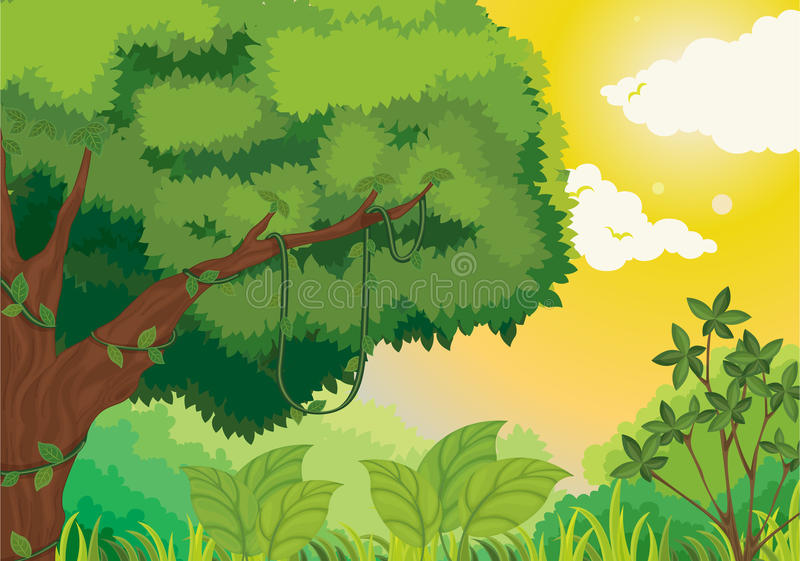 Selva no por do sol ilustração stock