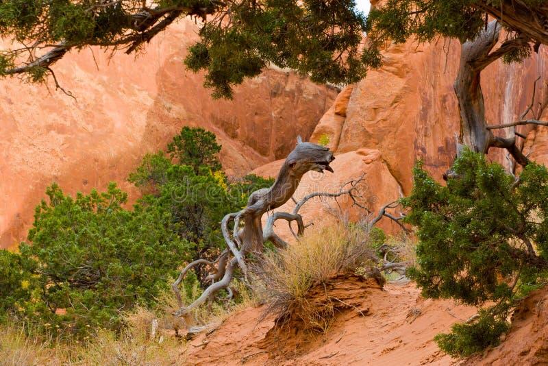 selva Paesaggio naturale in arché parco nazionale, Utah U.S.A. immagini stock libere da diritti