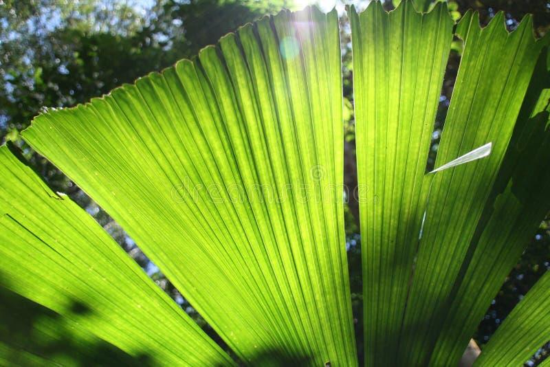 Selva Palmtree imagenes de archivo