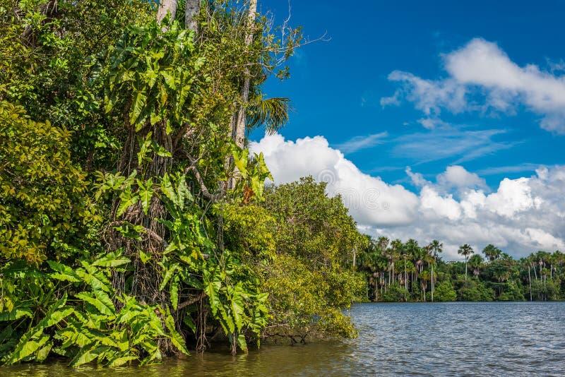 Selva peruana Madre de Dios Peru das Amazonas do rio imagem de stock