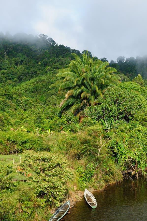 Selva selvagem tropical de Indonésia - Bornéu imagens de stock royalty free