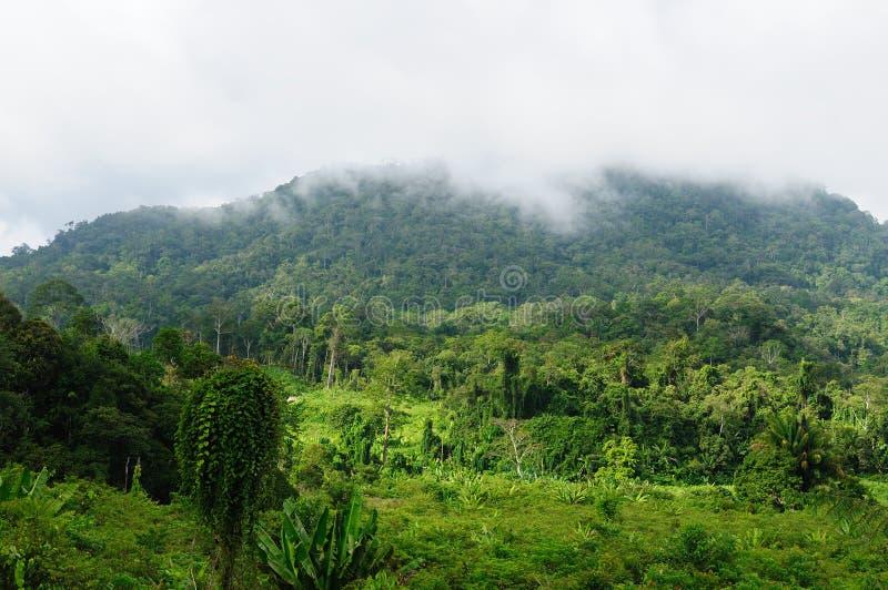 Selva selvagem tropical de Indonésia - Bornéu imagens de stock