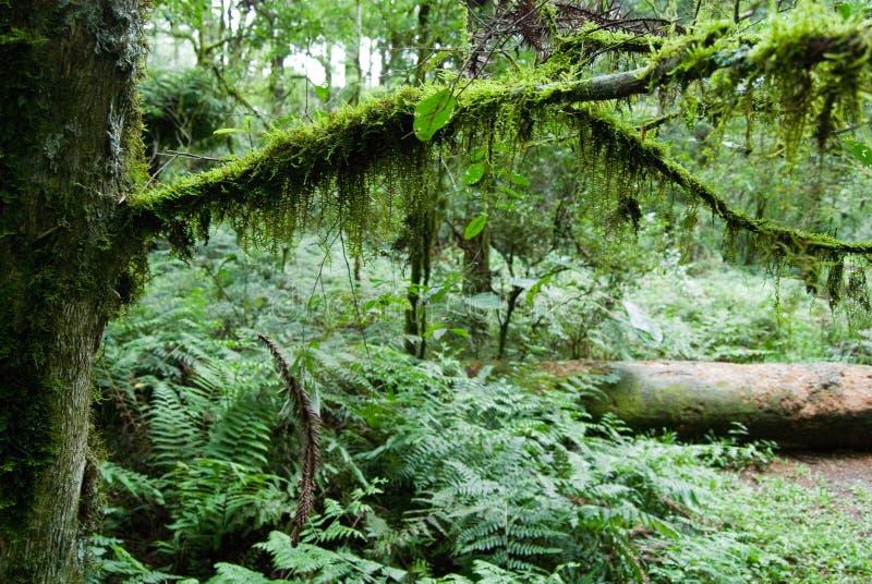 Selva tropical foto de archivo libre de regalías