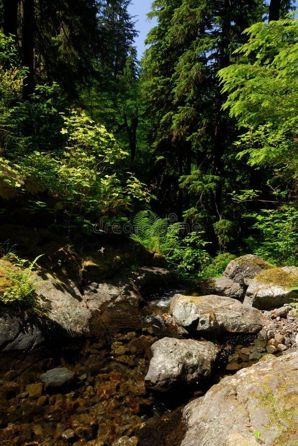 Download Selva tropical imagen de archivo. Imagen de cascadas, washington - 1296985