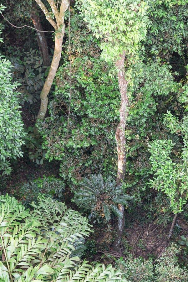 Selva tropical fotos de archivo