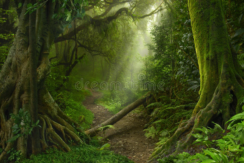 Selva tropical asiática fotos de archivo libres de regalías