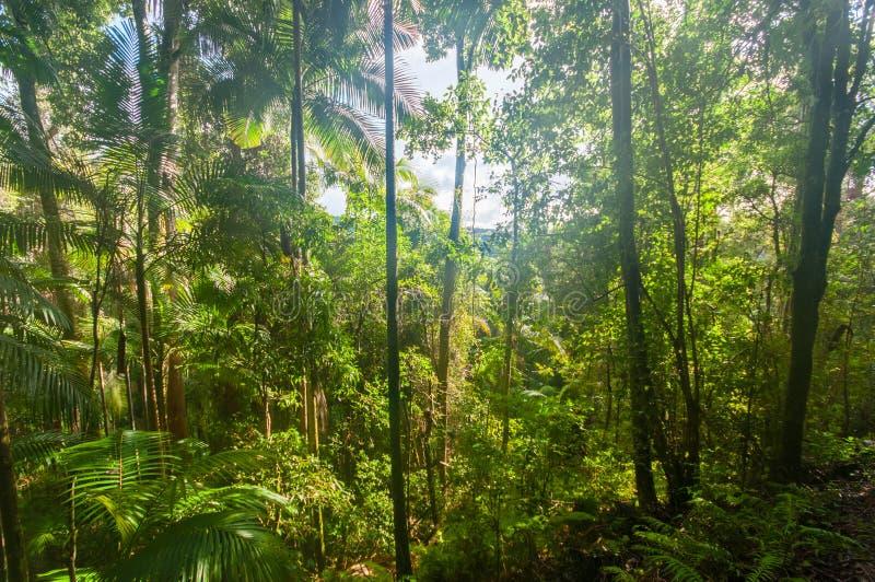 Selva tropical brillante foto de archivo libre de regalías