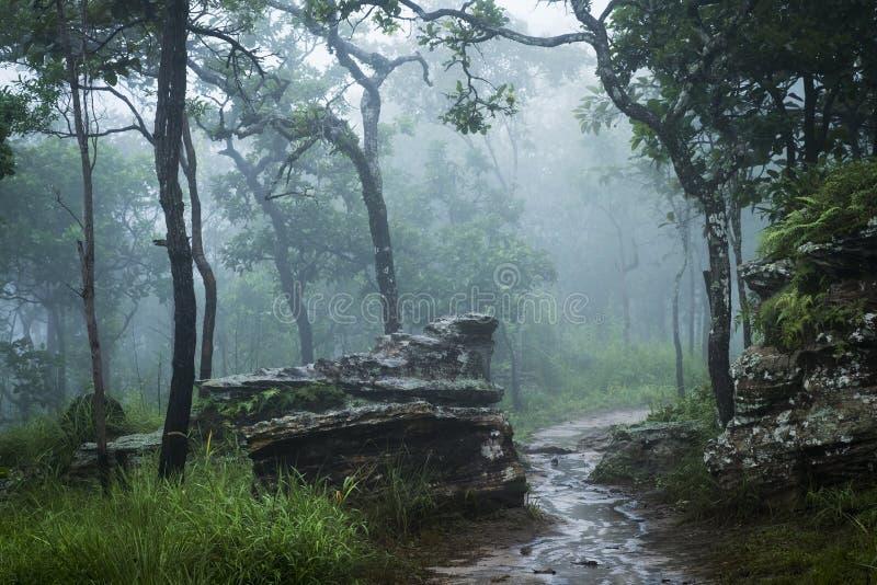 Selva tropical con la niebla, niebla foto de archivo