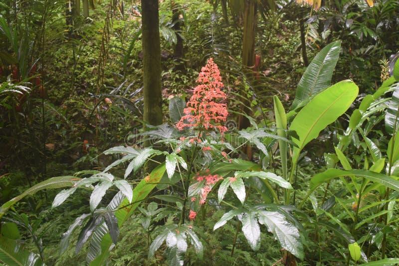 Selva tropical da floresta tropical como o ajuste com muito vegetação do verde fotos de stock