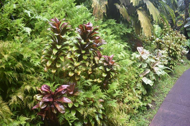 Selva tropical da floresta tropical como o ajuste com muito vegetação do verde imagens de stock royalty free