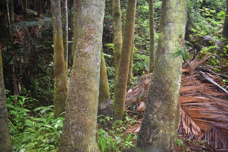 Selva tropical da floresta tropical como o ajuste com muito vegetação do verde fotografia de stock