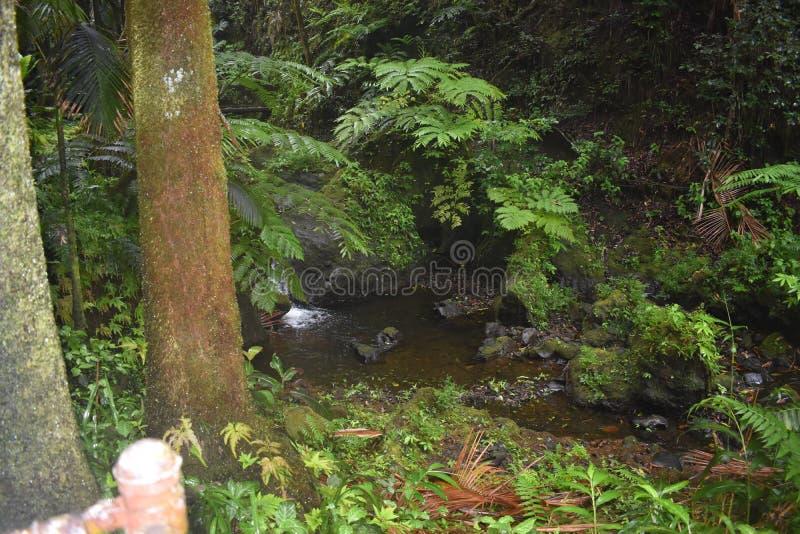 Selva tropical da floresta tropical como o ajuste com muito vegetação do verde foto de stock royalty free