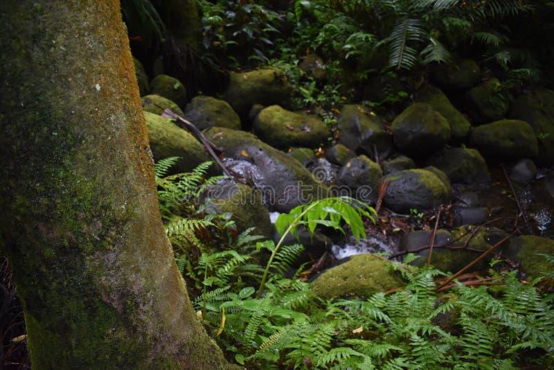 Selva tropical da floresta tropical como o ajuste com muito vegetação do verde foto de stock