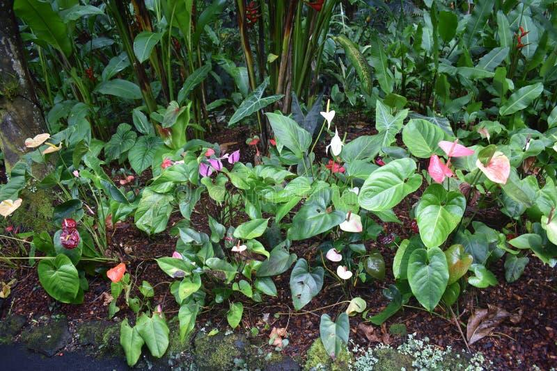 Selva tropical da floresta tropical como o ajuste com muito vegetação do verde imagem de stock