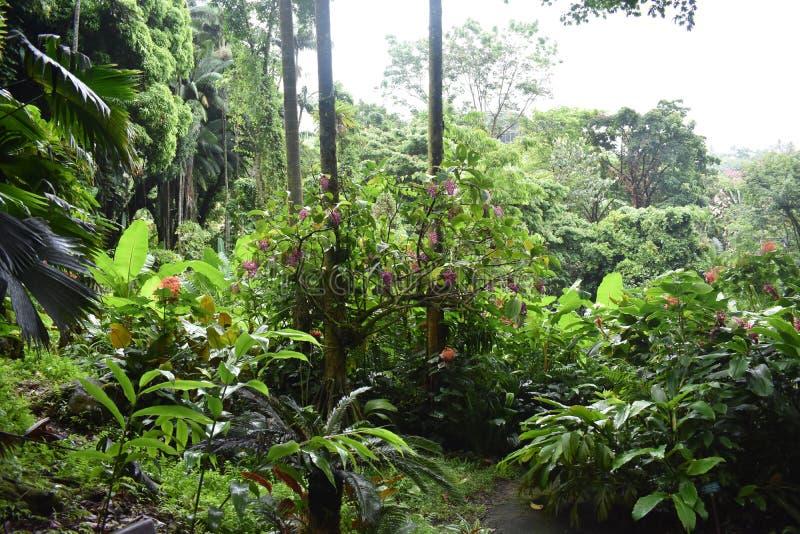 Selva tropical da floresta tropical como o ajuste com muito vegetação do verde fotografia de stock royalty free