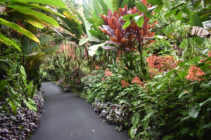 Selva tropical da floresta tropical como o ajuste com muito vegetação do verde fotos de stock royalty free