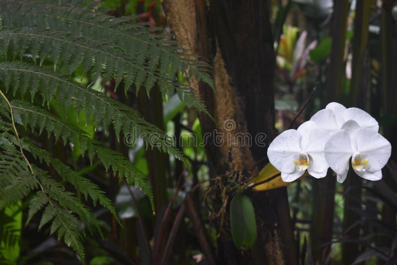 Selva tropical da floresta tropical como o ajuste com muito vegetação do verde imagem de stock royalty free