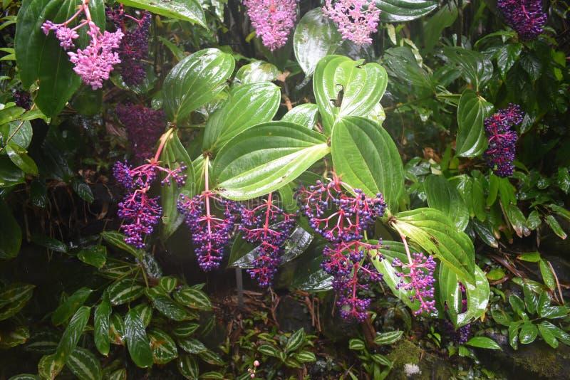 Selva tropical da floresta tropical como o ajuste com muito vegetação do verde imagens de stock