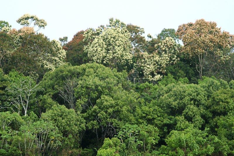 Selva tropical de Amazonas imagenes de archivo