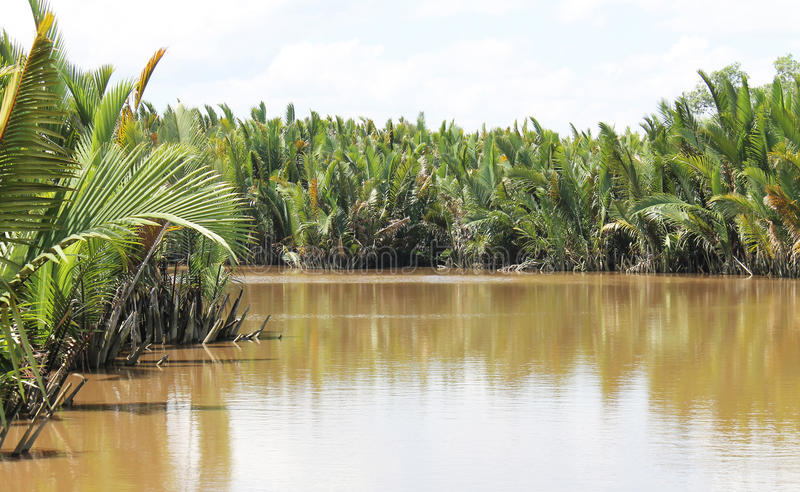 Selva tropical de Bornéu, Indonésia fotos de stock royalty free