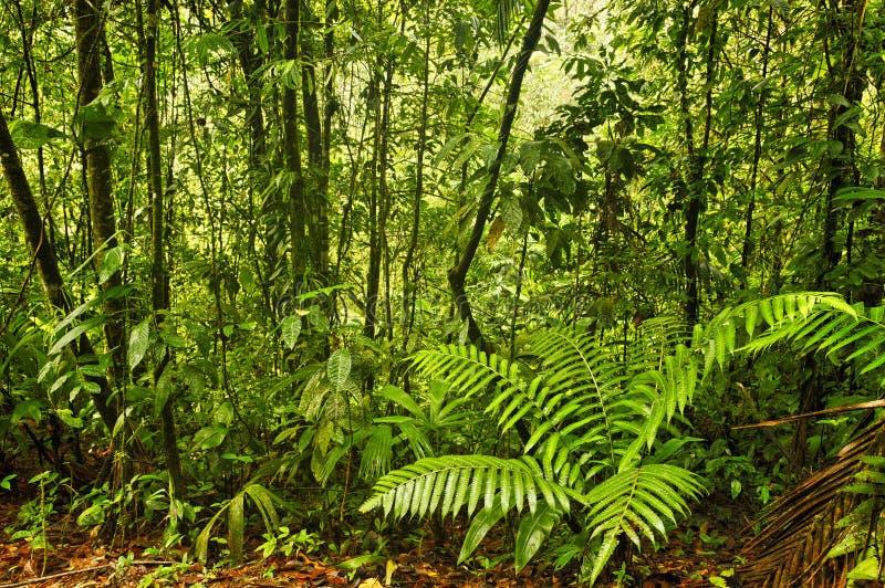 Selva tropical de Esquinas, Costa Rica fotos de archivo