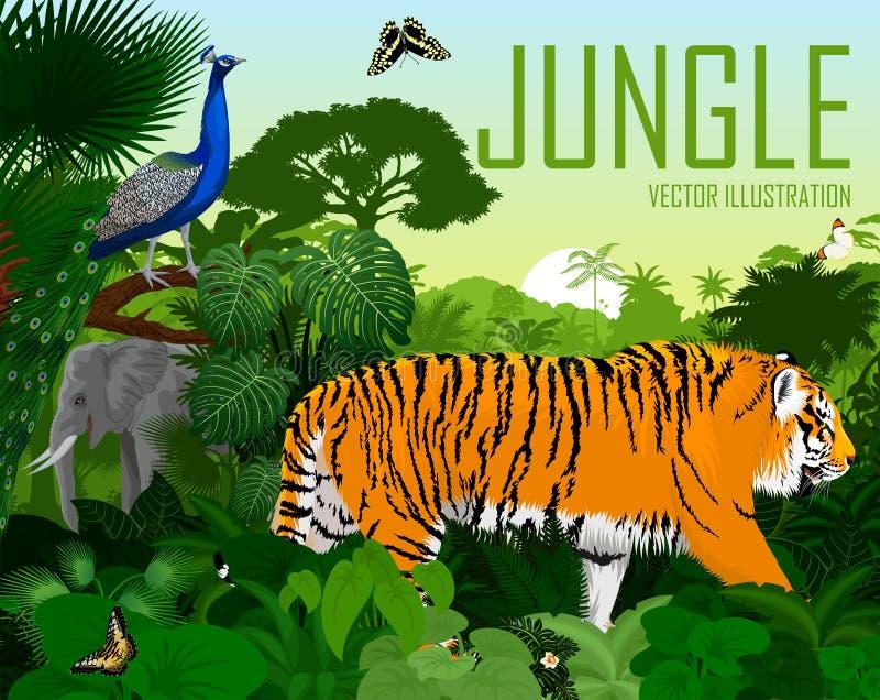 Selva tropical de la selva de la India del vector con el tigre, el elefante, el Peafowl masculino del pavo real y las mariposas libre illustration