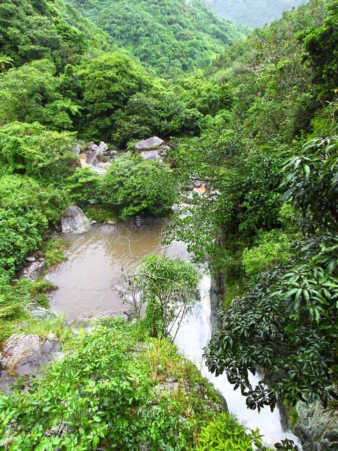 Selva tropical de Puerto Rico fotografía de archivo
