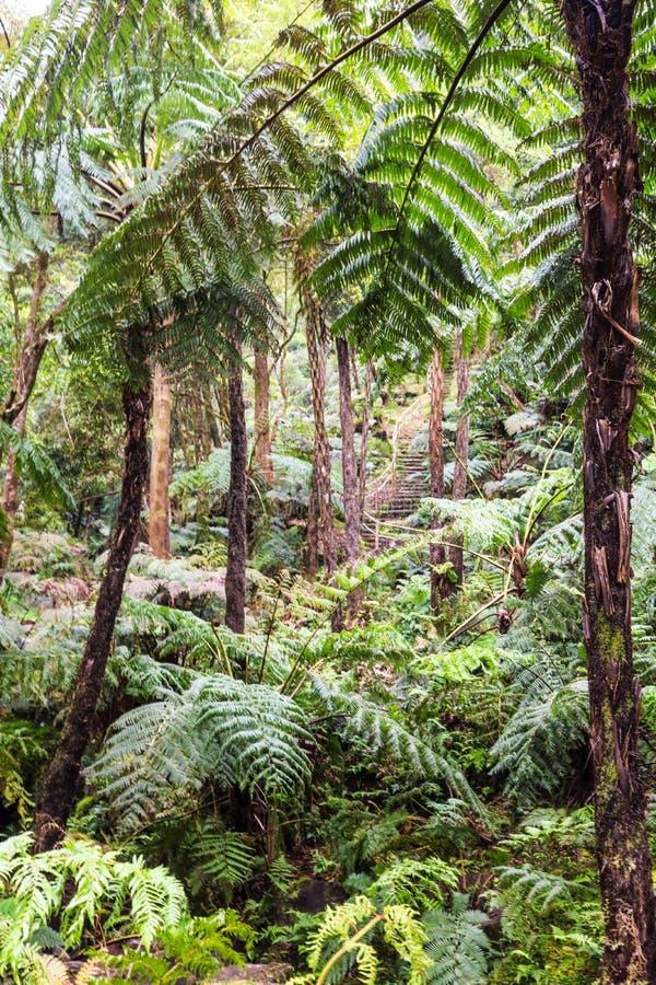 Selva tropical del árbol del helecho, Azores fotografía de archivo