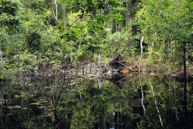Selva tropical del Amazonas fotos de archivo