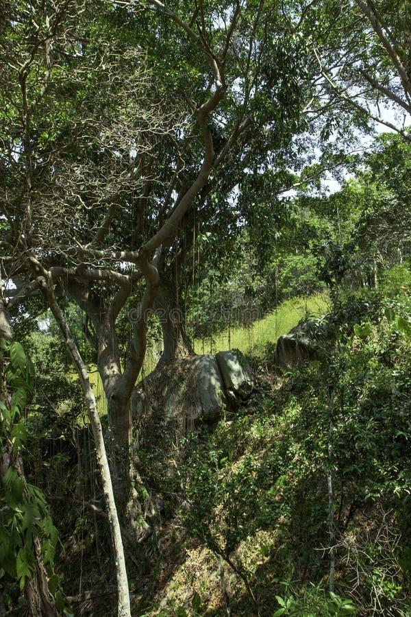 Selva tropical tropical del bosque usted puede ver el cielo azul a través de las plantas fotos de archivo libres de regalías