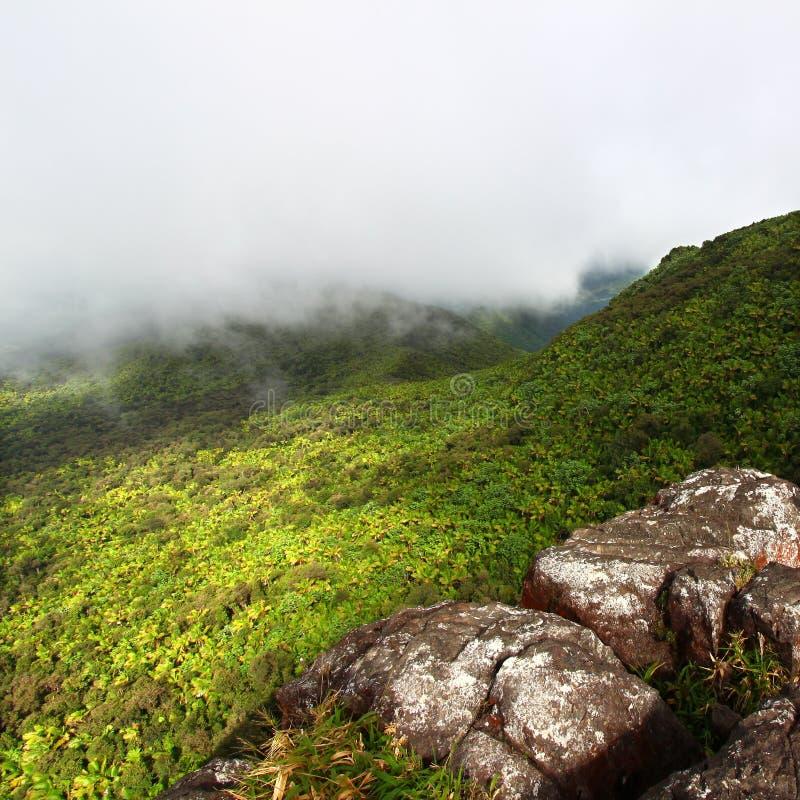 Selva tropical del EL Yunque - Puerto Rico foto de archivo