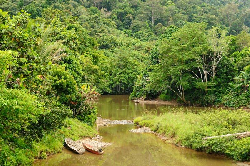 Selva tropical em uma ilha Bornéu em Indonésia imagens de stock royalty free