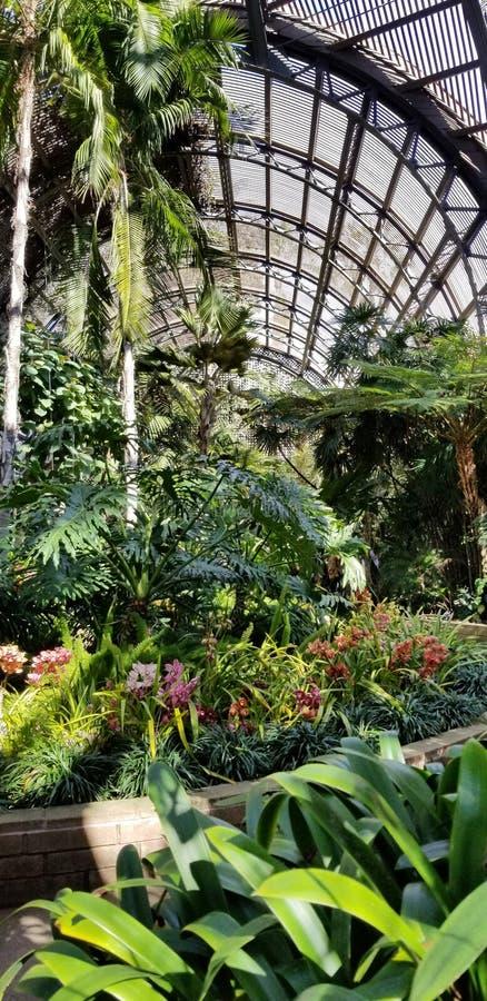 Selva tropical tropical en el edificio botánico en la arquitectura del Prado Historic de la casa en el parque San Diego Californi fotos de archivo libres de regalías