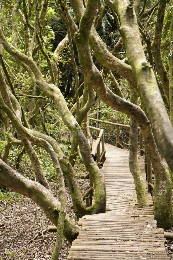 Selva tropical en la batalla Jorge fotos de archivo