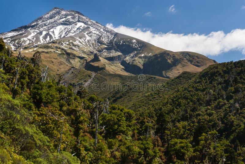 Selva tropical en las cuestas del soporte Taranaki en el parque nacional de Egmont fotografía de archivo