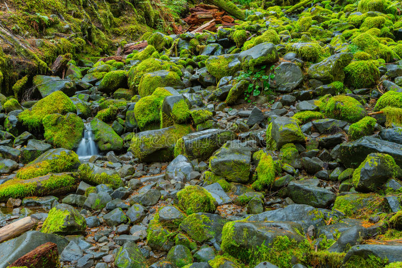 Selva tropical en Oregon imagenes de archivo