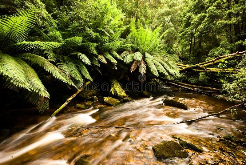 Selva tropical en Tasmania imagen de archivo libre de regalías