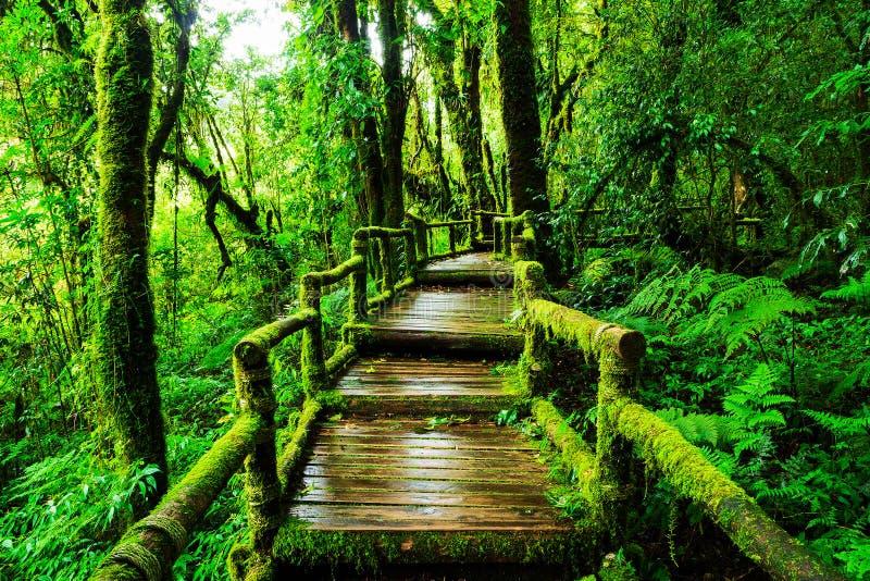 Selva tropical hermosa en el sendero de ka del ANG fotos de archivo libres de regalías