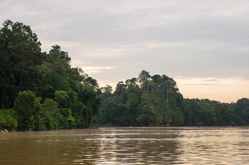 Selva tropical a lo largo del río de Kinabatangan, Sabah, BO de la madrugada imágenes de archivo libres de regalías