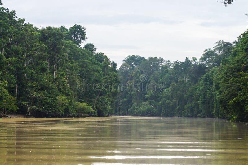 Selva tropical a lo largo del río kinabatangan, Sabah, Borneo Malaysi foto de archivo libre de regalías