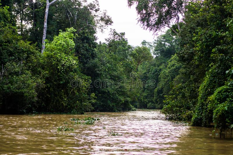 Selva tropical a lo largo del río kinabatangan, Sabah, Borneo Malaysi fotografía de archivo libre de regalías