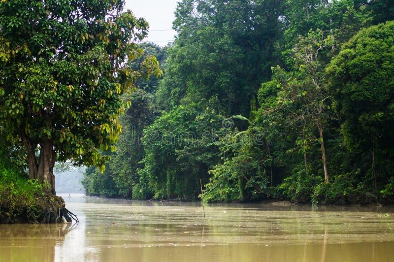 Selva tropical a lo largo del río kinabatangan, Sabah, Borneo Malaysi fotos de archivo libres de regalías