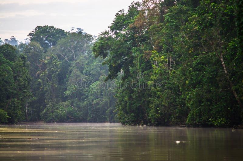 Selva tropical a lo largo del río kinabatangan, Sabah, Borneo Malaysi fotos de archivo